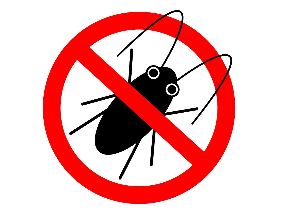 ゴキブリがいなくなるまで